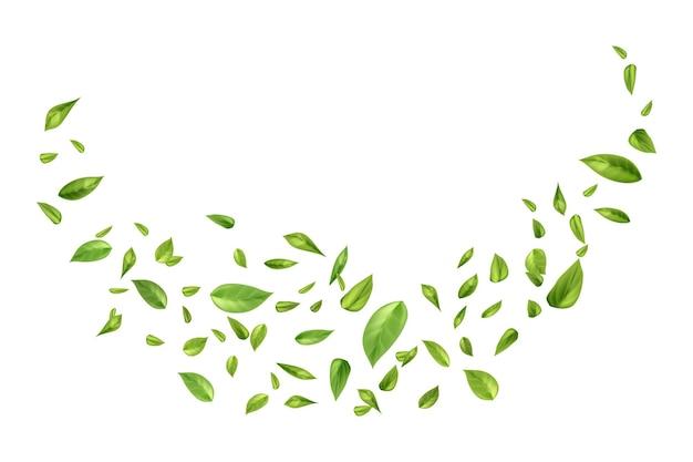 Foglie di tè o menta volanti o cadenti su sfondo bianco