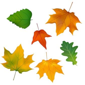 Fogliame, piante e foglie