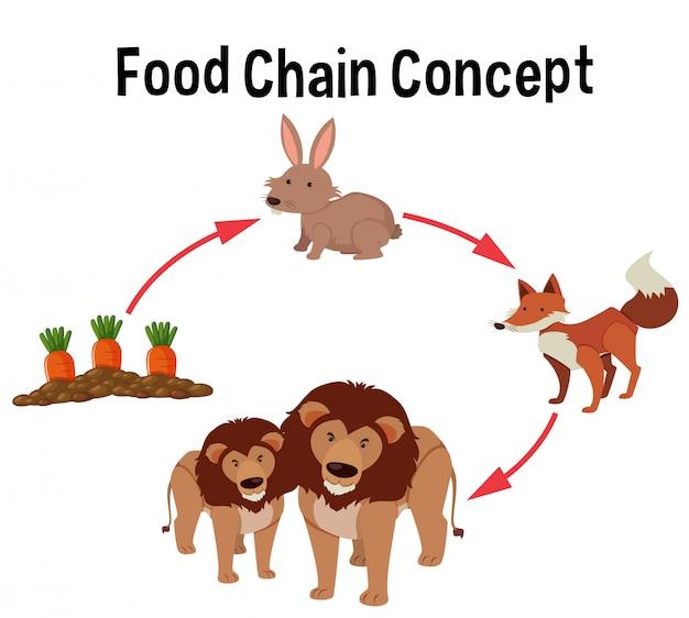 Diagramma del concetto di catena alimentare
