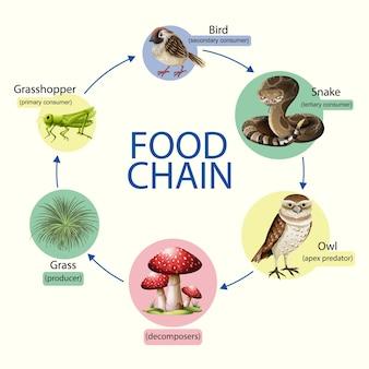 Concetto di diagramma della catena alimentare