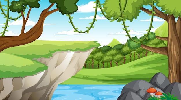 Foresta in scena diurna con vari alberi della foresta
