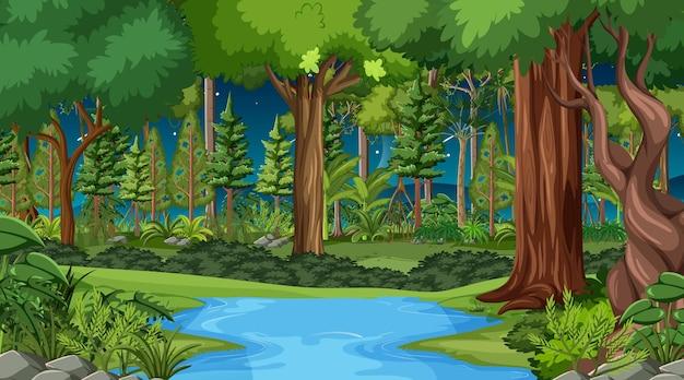 Scena del paesaggio forestale di notte con molti alberi diversi