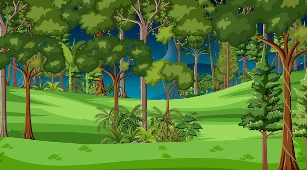 Scena di paesaggio forestale di notte con molti alberi