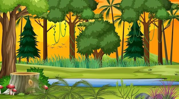 Scena del paesaggio forestale all'ora del tramonto con molti alberi diversi