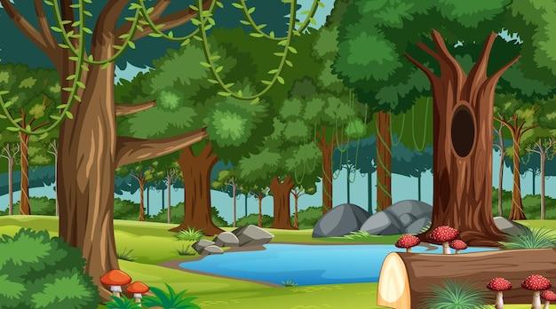 Scena del paesaggio forestale con vari alberi forestali