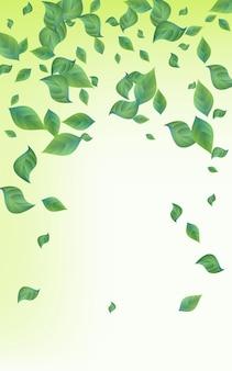 Le foglie della foresta volano sullo sfondo di sfondo verde di vettore. concetto di foglia di ecologia. design di sfocatura del fogliame di lime. brochure foresta verde.