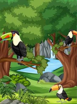 Scena di foresta o foresta pluviale con famiglia di tigri Vettore Premium