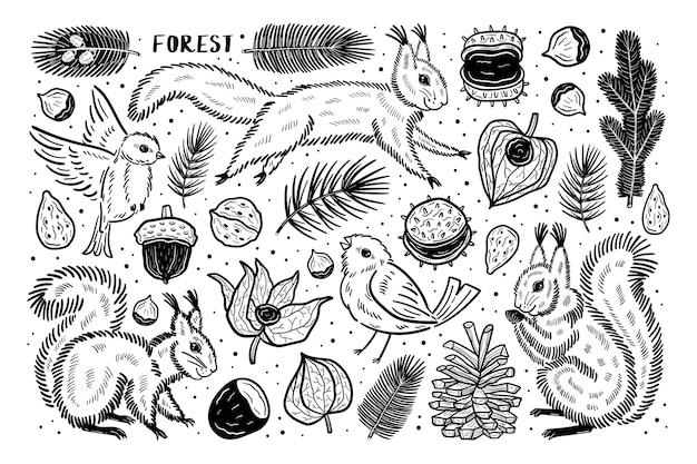 Foresta insieme di elementi clip art natura piante. scoiattolo, uccello, pino, noce e ramo di castagno semi di ciliegio invernale physalis