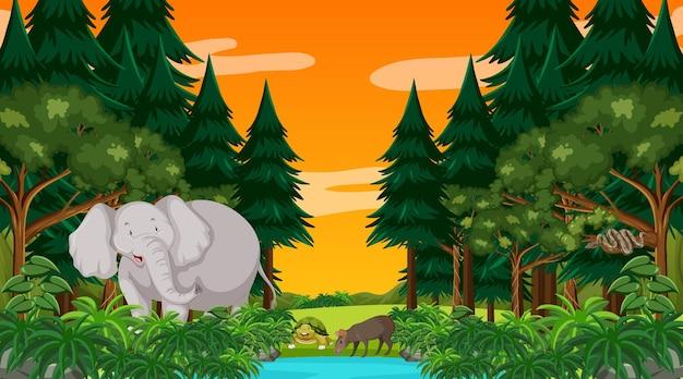 Scena della foresta al tramonto con un grande elefante e altri animali