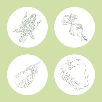 Quattro icone di schizzo di prodotti freschi