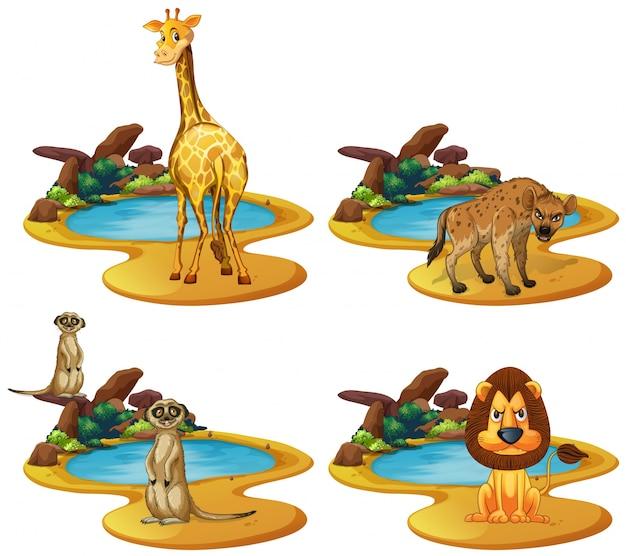 Quattro tipi di animali vicino allo stagno