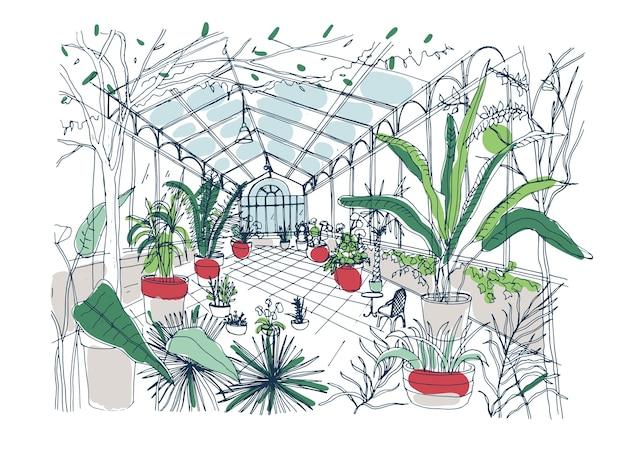 Disegno a mano libera dell'interno del giardino botanico ricco di piante tropicali con fogliame verde.