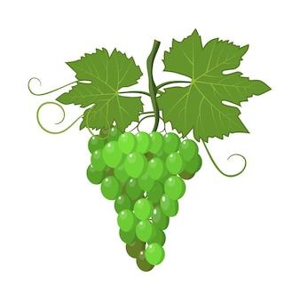 Icona fresca del mazzo dell'uva verde su bianco