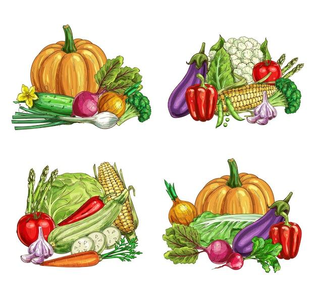 Schizzi di verdure fresche di fattoria di cibo vegetariano da giardino