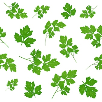 Foglie di prezzemolo verde fresco su sfondo bianco. prezzemolo isolato. . seamless pattern.