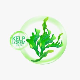Illustrazione di frutti di mare insalata di alghe kelp fresche