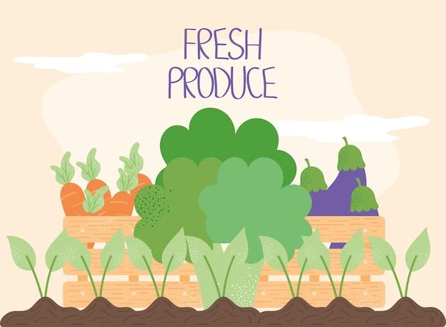 Coltivazione di prodotti freschi