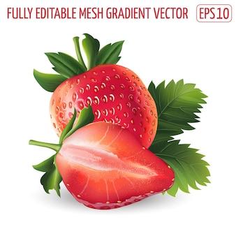Fragola matura fresca - disegno di cibo sano. illustrazione realistica.