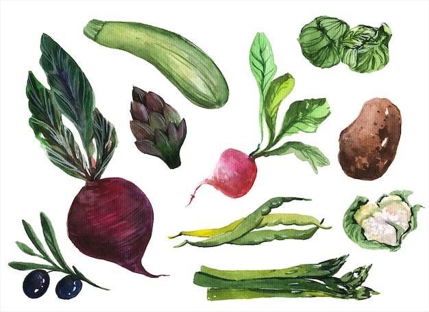 Insieme di illustrazioni dell'acquerello disegnato a mano di verdure fresche. accumulazione di verdi su priorità bassa bianca. ingredienti per insalata, verdure, alimenti biologici, articoli per la nutrizione sana confezione di dipinti di aquarelle