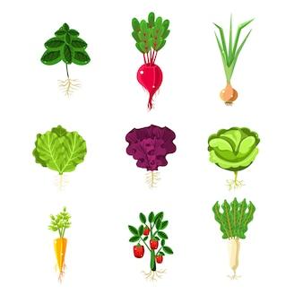 Verdure fresche con set di illustrazioni primitive di radici