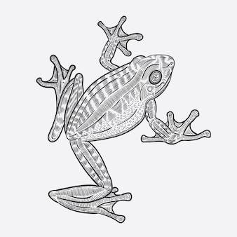 Arte vettoriale rana