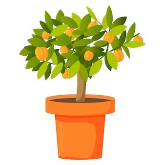 Albero di albicocca della frutta in un vaso.