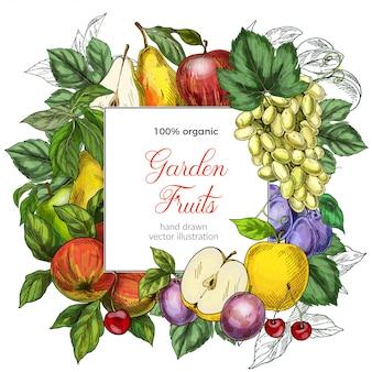 Modello della bandiera quadrata di frutta
