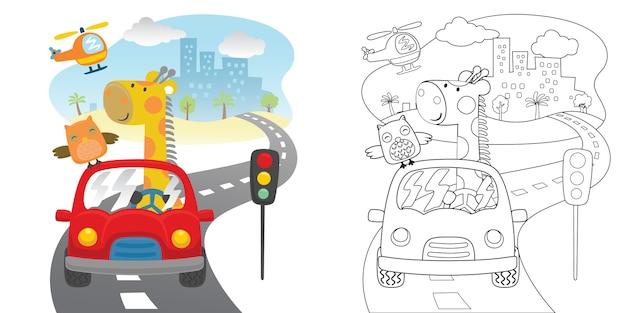 Orso divertente con il gufo sulla macchina rossa in strada