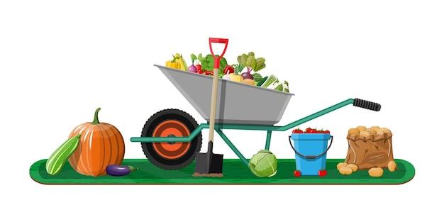 Raccolto in giardino con verdure e diverse attrezzature da giardinaggio