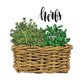 Erbe aromatiche, foglie di tiraggio della mano naturale con scritte