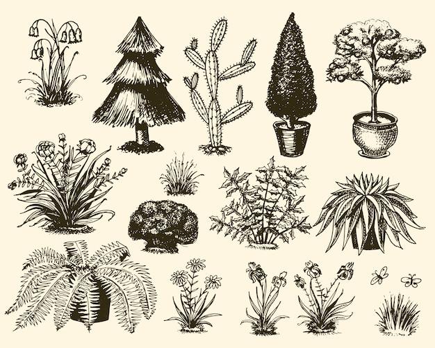 Piante di giardino che fanno il giardinaggio e che piantano con l'illustrazione decorativa dei fiori o dell'albero piantata all'aperto della decorazione botanica stabilita del fiore di fioritura isolata