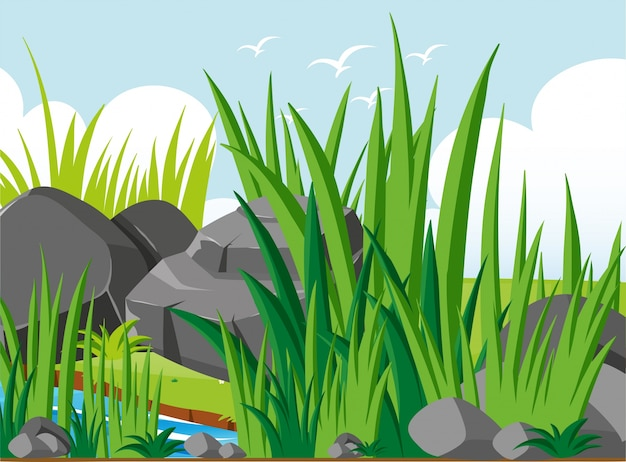 Scena del giardino con rocce e erba
