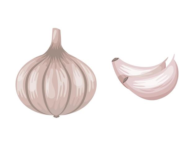 Disegno di aglio isolato su sfondo bianco. illustrazione vettoriale