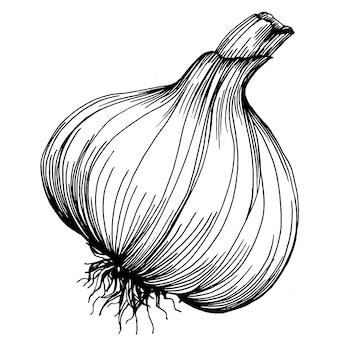 Illustrazione di schizzo del disegno della mano dell'aglio. stile inciso. prodotto sul mercato agricolo. la migliore posizione per menu di design, etichette, badge, banner e promozione.