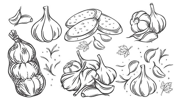 Insieme dell'icona monocromatica disegnata di contorno di aglio.