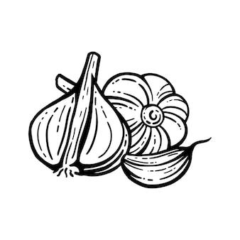 Aglio insieme. illustrazioni disegnate a mano. aglio affettato sfondo isolato. con strati.