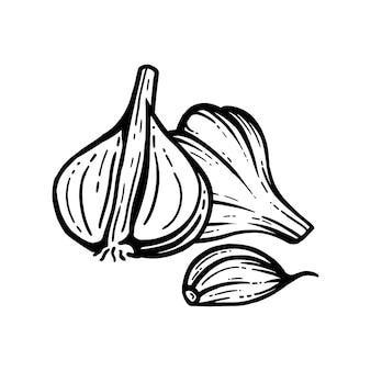 Schizzo di aglio. aglio tritato. fondo isolato di schizzo di vettore. con strati.