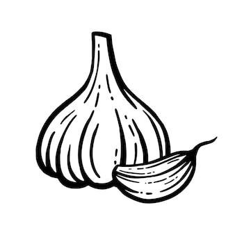 Vettore di aglio. disegnato a mano. testa di aglio sfondo isolato.