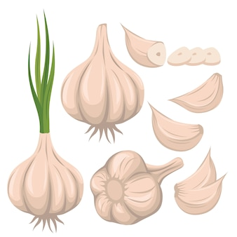 Illustrazione stabilita di vettore dell'aglio