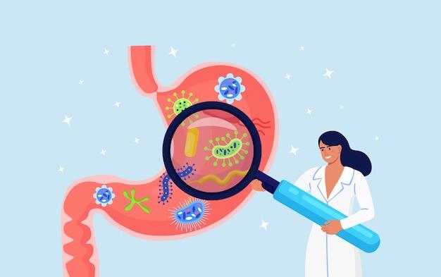 Gastroenterologia. il dottore ispeziona lo stomaco con la lente d'ingrandimento. scienziato che studia il tratto gastrointestinale e l'apparato digerente. medico che fa analisi di microrganismi intestinali