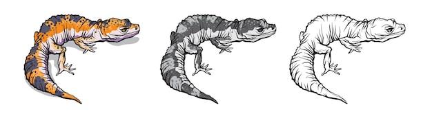 Geco lucertola animale. rettile nella fauna selvatica naturale isolato in uno sfondo bianco.