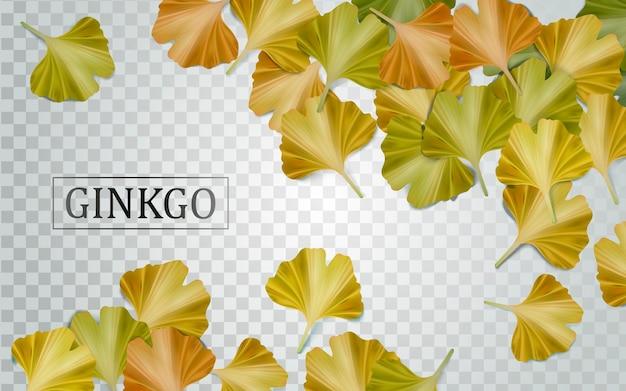 Elementi di ginkgo biloba con foglie