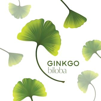 Ginkgo biloba isolato in design piatto