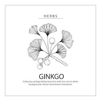 Ginkgo biloba leaf disegni.