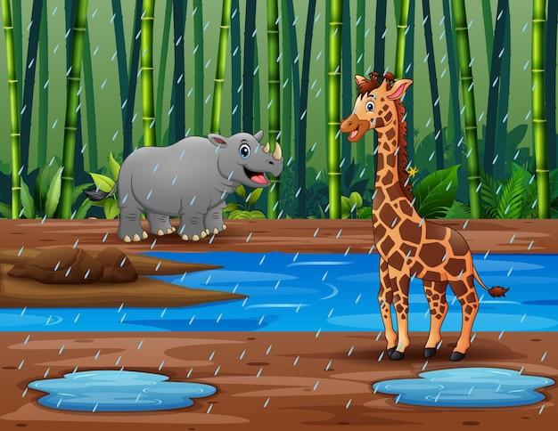 Una giraffa e un elefante nella foresta di bambù sotto la pioggia