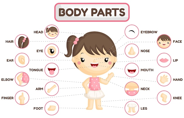 Grafico delle parti del corpo della ragazza