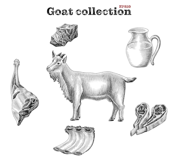 Elementi di capra in bianco e nero impostati in stile incisione