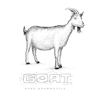 Capra con stile in mano disegno, illustrazione di animali sembra realistico, astratto in bianco e nero