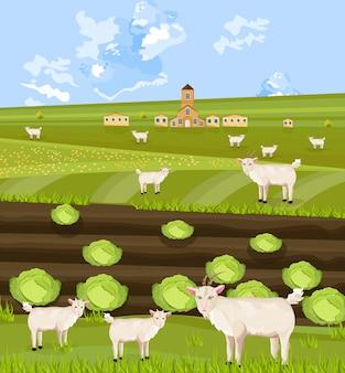 Capre alla fattoria