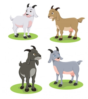 Illustrazione di capre